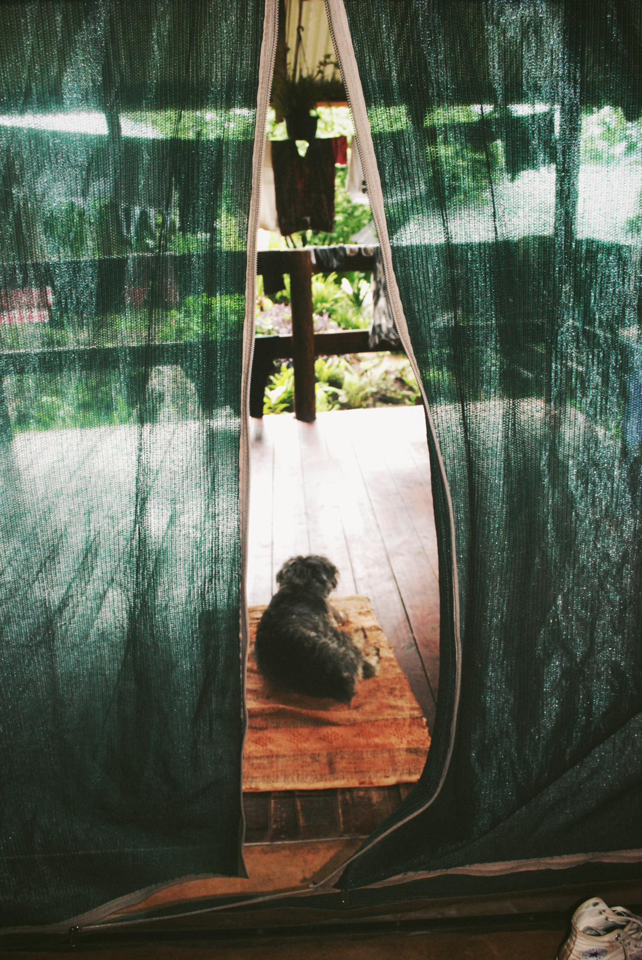 Hostel in Swaziland, we stayed in a tent guarded by the cutest dog!