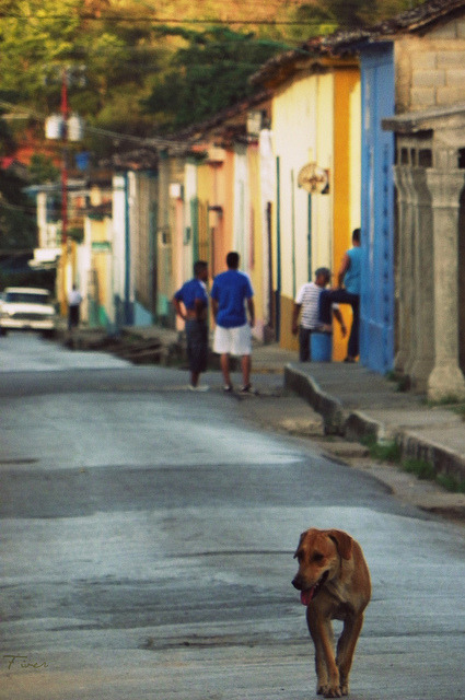 de perros caminos.  on Flickr.oriente vivo  Sucre - Venezuela @FiverWeed twitter /tumblr/ blogger