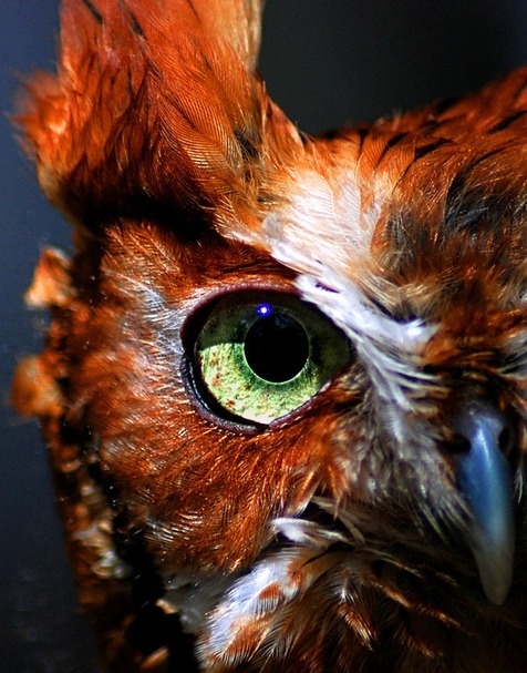 "Owl Eye"" by Melissa Papaj"
