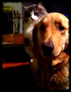 My dog and cat sit and wait patiently every night hoping I will share some of my dinner.