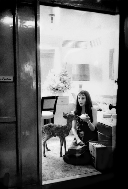 theniftyfifties:  Audrey Hepburn by Bob Willoughby, 1959.