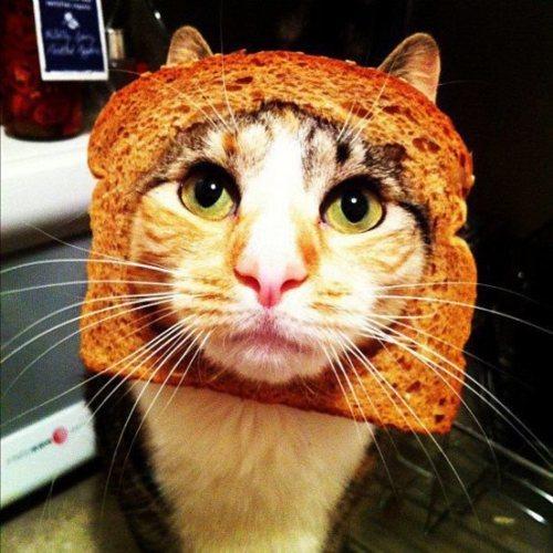 海外ではパンの耳を猫につけるのが大流行中 | A!@attrip