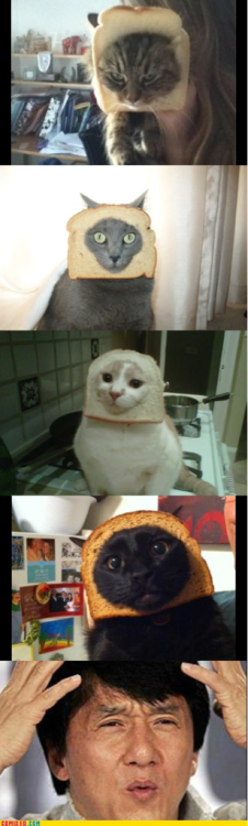 Cats & bread. (?)
