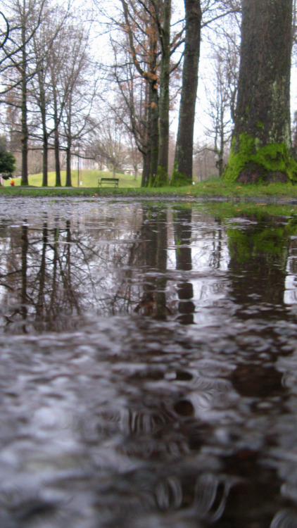 A good thing about rainy cities: puddles become mirrors.   In this case it was a slightly flooded sidewalk out at UBC this afternoon.