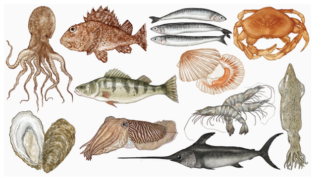 A selection of Katie Scott's illustrations for Fish: Recipes from the sea. Published by Phaidon.