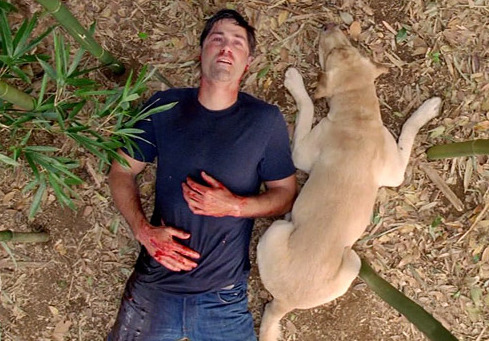 "fuckyeahlost:  Vincent named one of TV's greatest pets by TVGuide Man's best friend, indeed. Vincent wasn't always integral to every story Lost told, but he was always there for the significant moments in the island  lives of the Oceanic 815 crash survivors, including the series' last  scene. We dare you not to tear up when Vincent, loyal and true, makes  sure that Jack (SPOILER ALERT!) doesn't ""die alone."""