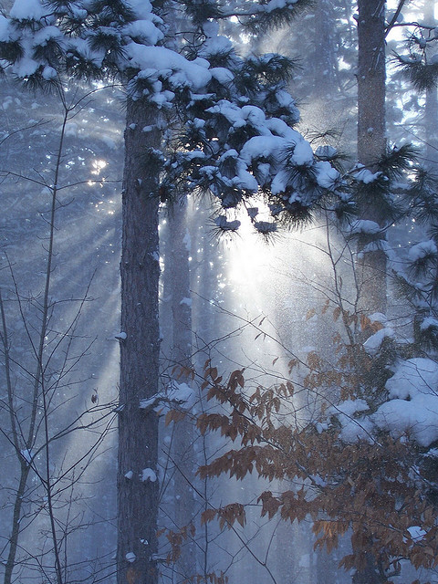 Michigan Forest in Winter; Winter Love starburst © Pamela Gail Shinn 2009 by pgs3532004 on Flickr.