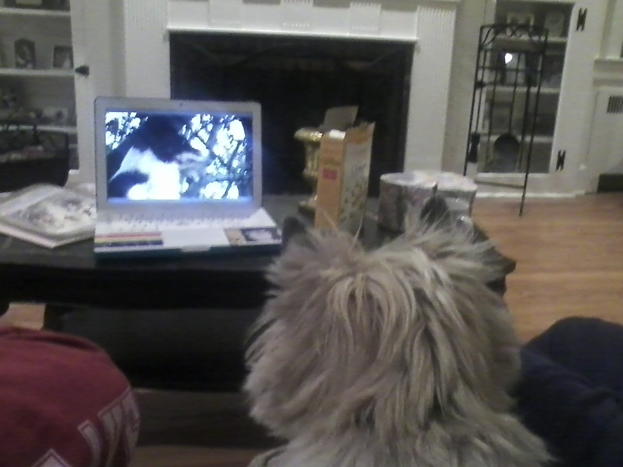 finn is really into this episode of mist: sheepdog tales.  …so is my father.