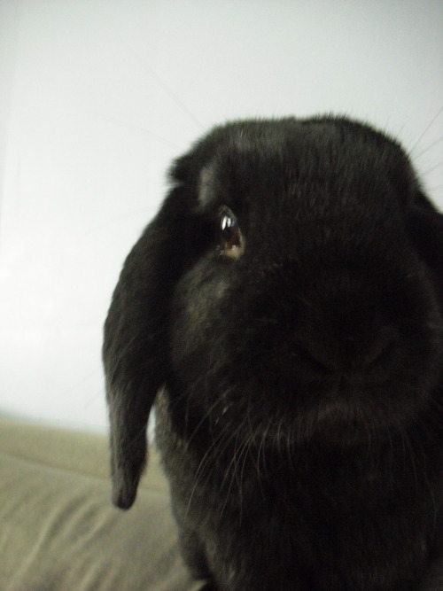 sarahsoda: This is my sweetheart, Nub. He passed away in 2009 but I still miss him. How can you resist that face?
