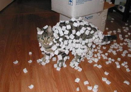 packing peanuts are not eating peanuts, cat. even if they were, when did you decide they were also a fashion statement?