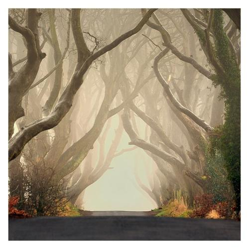 The Dark Hedges By Hoobie
