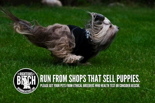 Adopt, don't shop! Run from pet shops that sell puppies because they get them from puppy mills.