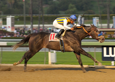 Runaway Malibu Stakes (II) winner The Factor hopes to keep Bob Baffert's hot streak rolling when he faces off against Amazombie in this Saturday's San Carlos (II) feature race at Santa Anita.