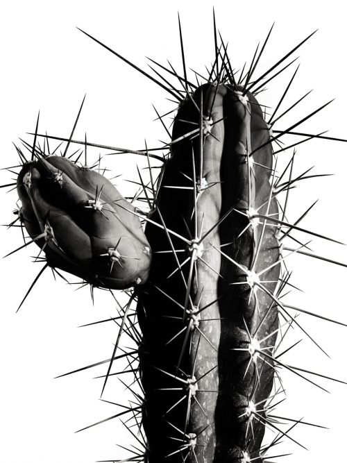 "CC52, Week 47: ""Cactus"" Concept: To look at cacti as shapes and forms. Stylist: Julie Flynn. 11 photos. See more here."