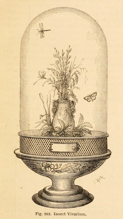 Insect Vivarium, engraving (1866).