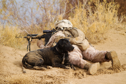 plausible-deniability:  A US Marine dog handler, and his military working dog pull security during a patrol in Afghanistan.  Military working dogs are absolutely incredible and a vital part of military operations. They are under appreciated, they can sniff out anything from an insurgent in a drainage pipe, to a bomb in a dead animal, not to mention they boost the moral of the Soldiers, Sailors, Airmen and Marines around them.