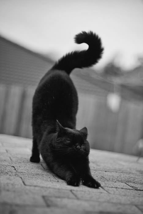 I'm serious, I really really want to have a phantom black cat!!!