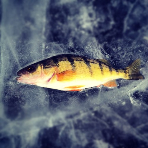 wooo we caught a fish  (Taken with instagram)