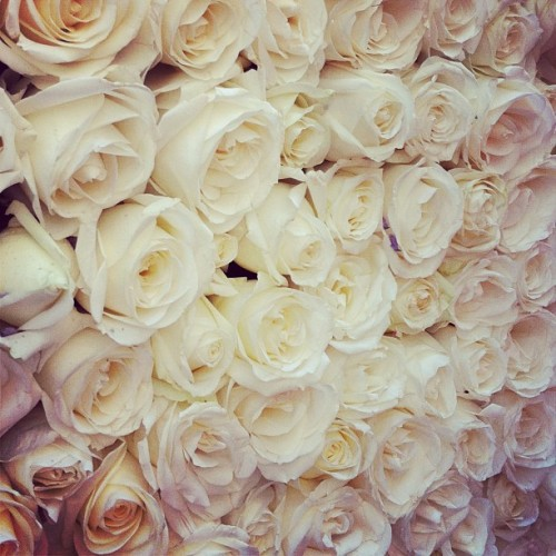 Just a few of the estimated 20,000 white roses decorating the @FSLosAngeles tonight. #QVCRedCarpet  (Taken with instagram)