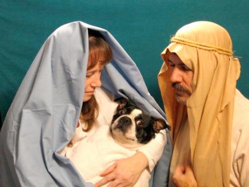 This pooch died for our sins.