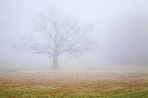 Foggy Landscape by Greg Hartford