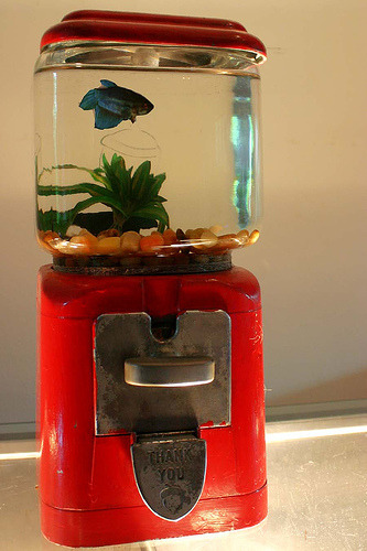 unconsumption:  Old gumball machine = new aquarium!   To make your own aquarium, Instructables offers a tutorial here. (photo by eyewash on Flickr)