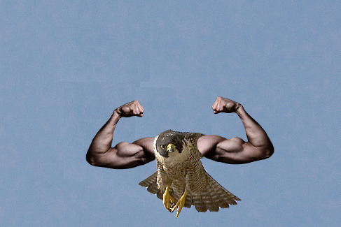 pizzamilf:  Created by me.  buff hawk. good work!