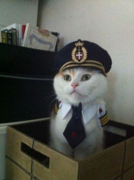 missrockyhorror:  Captain Kitty, Ready for Take off