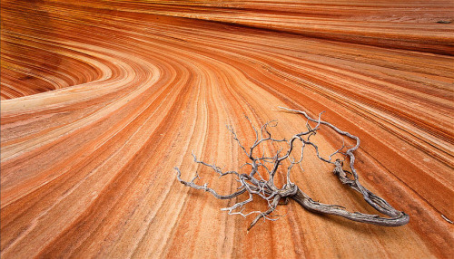 ninbra:  The Wave, Coyote Buttes, Arizona and Utah border.