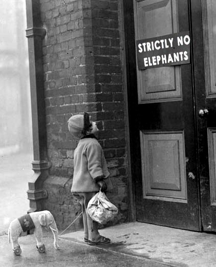walkinthezoo:  little elephant,that's not your fault…