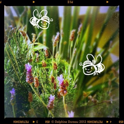 Winter lavender- lavande d'hiver #かわいい #del4yo #cute  (Taken with instagram)