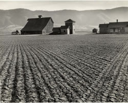 distinguishedcompany:  emily-whaaa: Minor White - Harrowed Field, Union, Oregon - 1941 - Gelatin silver print