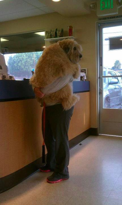 hahaha my dog does this at the vet. will not let go.