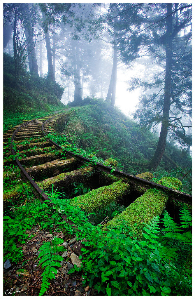 bitchville:  Jiancing Historic Trail, like many other trails in Taipingshan National Forest, was built along the old logging railway. The elevation of 2000m is the height at which clouds form and linger. Jiancing (見晴) actually means the wish for a clear day. For a photographer, however, there's nothing better than hiking all day in the impenetrable white mist. The Wish For A Clear Day by Journeywithlight