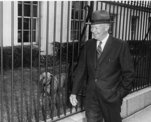 "Ike and his Weimaraner dog, Heidi President Eisenhower's beloved pet Heidi spent time at the White House as well as Ike's Gettysburg farm. In a letter to Postmaster General Arthur Summerfield, who gave the dog to him, Ike wrote:  ""Heidi is definitely an asset to life in the White House. She cavorts on the South Lawn at a great rate, with such important projects as chasing squirrels and investigating what might be under bushes.  She is beautiful and well-behaved (occasionally she tends towards stubbornness but is then immediately apologetic about it.)""  from the Eisenhower Library"