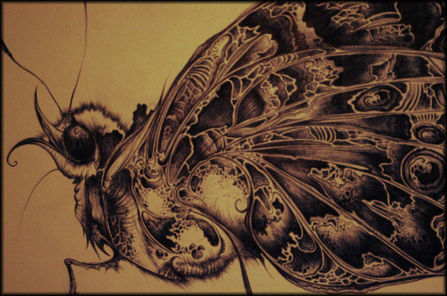 eatsleepdraw:  Biro moth study. Find more at: http://blendintoone.tumblr.com/