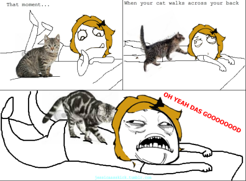... Size | More rage comic archive com funny meme cat massage