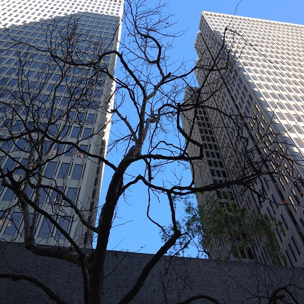 2 #Embarcadero #Center #Building #Friday #sf # Downtown #instagramhub #Tree #City  (Taken with instagram)