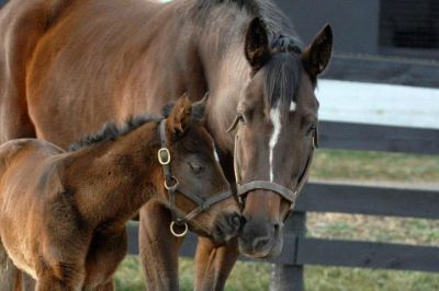 2012 foals: A Candy Ride colt out of Navigator (Stormy Atlantic x Princess Birdeye, by Indian Charlie)