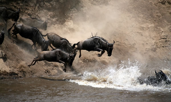 There's no better time to visit Kenya than to see the Great Wildebeest Migration!