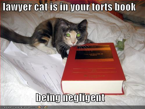 Lawyer cat is in your torts book…being negligent. LOL. I'm such a geek, law jokes just crack me up.