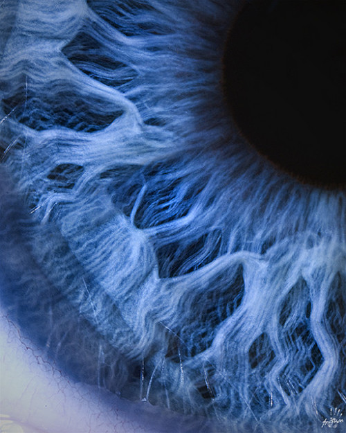 milesian:  Macro Photograph of the Human Eye