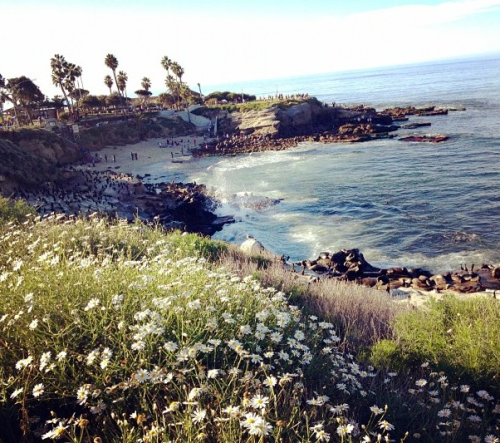urban-oasis:  naive-kids:  I love san diego  this looks beautiful.