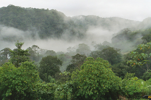 justmycupoftea:  Rainforest - Cloudforest by bayucca (busy) on Flickr.