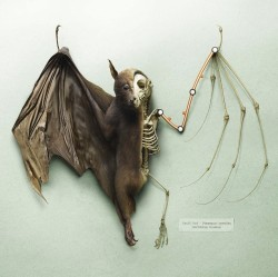 Bat Anatomy by Peter Lippmann