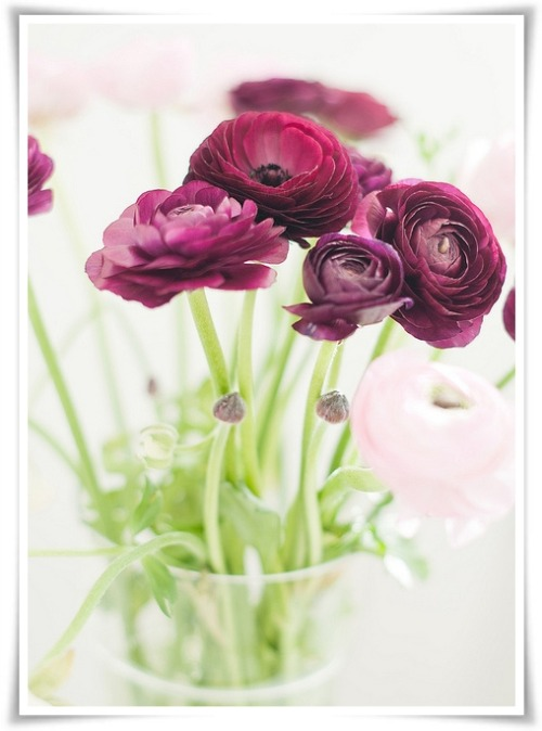 heartbeatoz:  (via Karin A fotografi: A reminder and ranunculus)