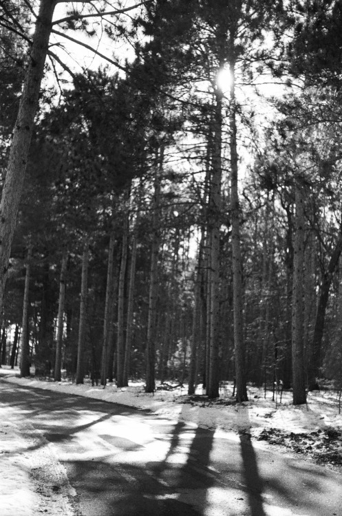 +The woods Via Yashica GSN rangefinder with HP5 b&w