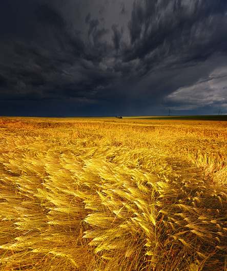 bluepueblo:   Coming Storm, Barley Field, Germany photo via indie
