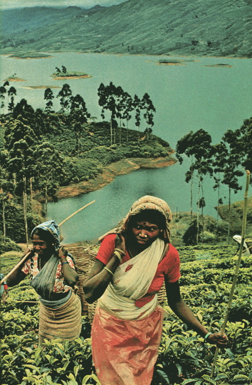 National Geographic, january 1979 : Sri Lanka, Photographs by Raghubir Singh.