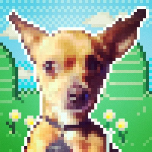 Buñuelo the Chihuahua in pixel art! This #pixelpix #app takes me back to my MarioPaint & game creation days.  #pixel #art #dog #chihuahua #puppy #cute #8bit #awesome #iphoneography #iphoneonly #nes #nostalgia #rad #cool #radical (Taken with instagram)